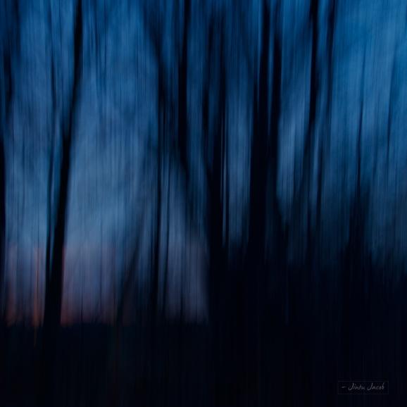 abstract created by trees on blue hour sky in the background